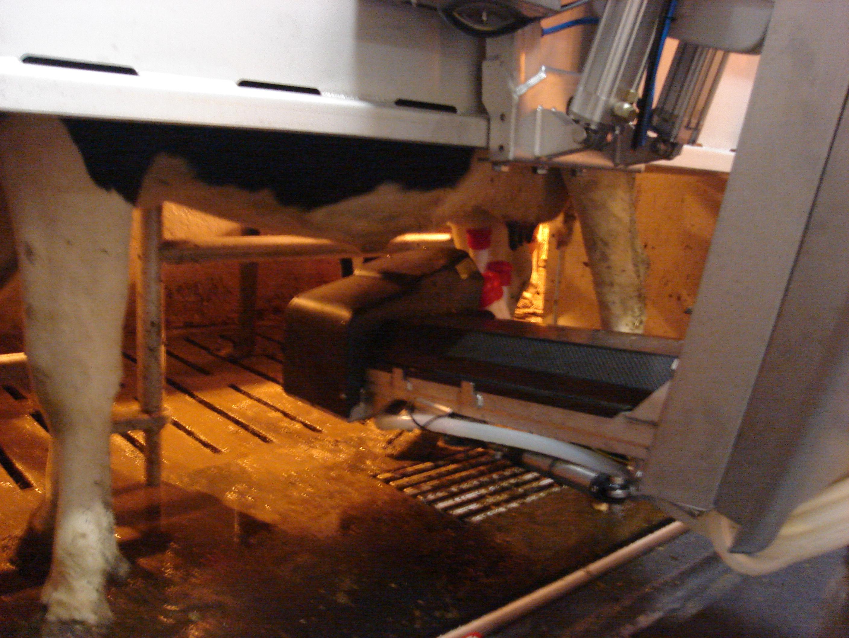 Hoe werkt een melkrobot